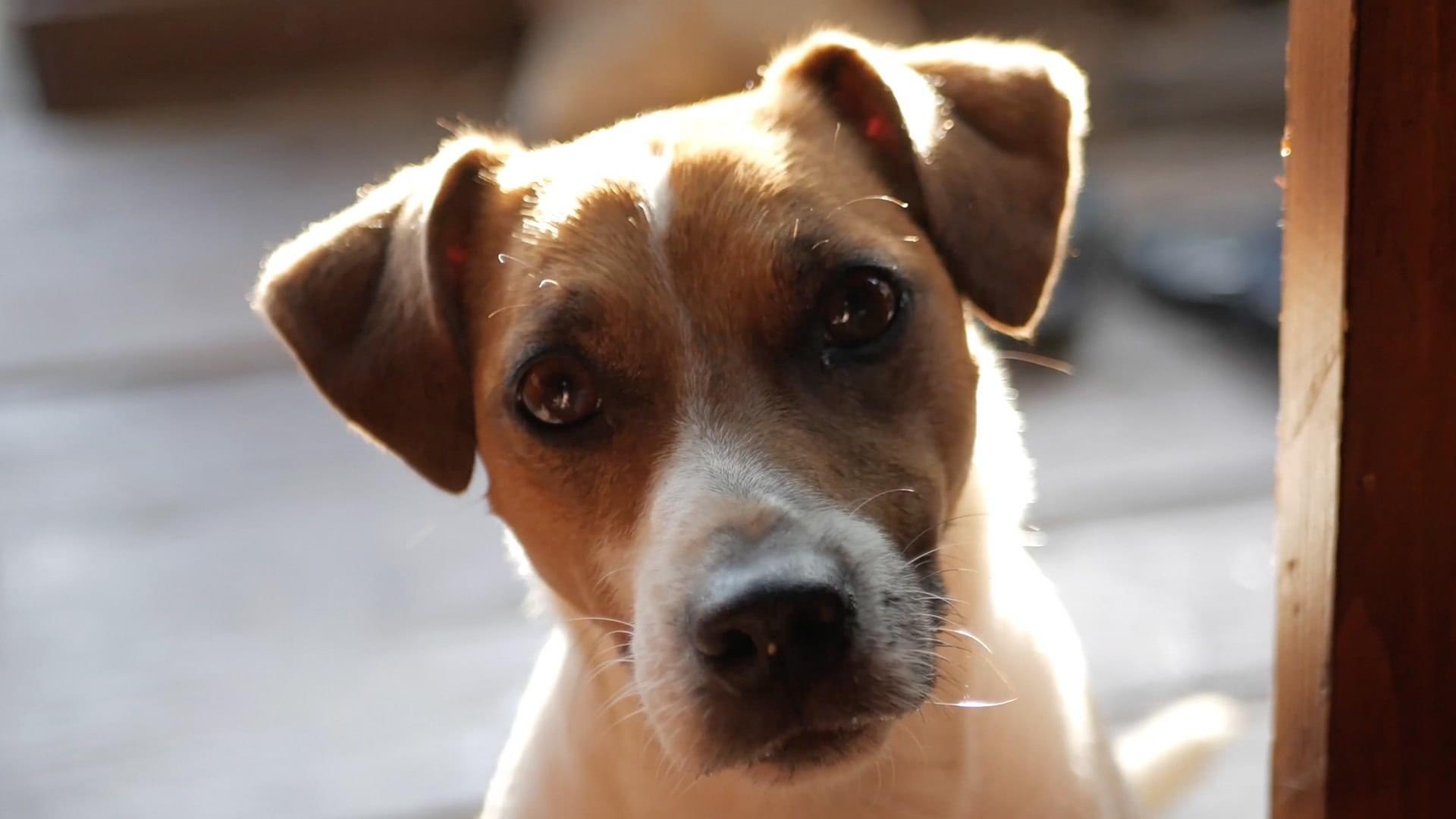 Music For Pets Case Studies Header
